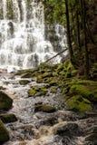 водопад Тасмании Стоковые Изображения