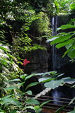 Водопад тропического леса Стоковые Фотографии RF