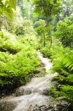 Водопады в лесе весной Стоковые Изображения RF