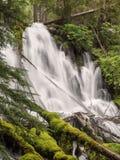 Водопады и мшистые журналы Стоковое Изображение