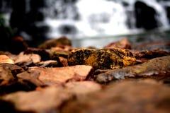 Водопады намочили камни Стоковая Фотография