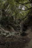 Водопады погруженные в зеленом цвете леса Стоковое Фото