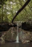 Водопады погруженные в зеленом цвете леса Стоковое Изображение