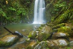 Водопады тропического леса, падения Beauchamp, Австралия Стоковые Фото
