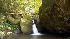 Водопады Springbrook Стоковая Фотография RF