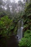 Водопад Beauchamp в сочном тропическом лесе Стоковая Фотография RF