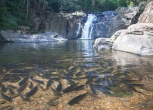 водопад plitvice национального парка Хорватии Стоковое Изображение RF
