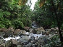 Водопад Yunque стоковые изображения rf