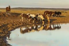 Водопой Стоковое Фото