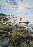Водоросли морской водоросли Брайна на утесе в заходе солнца стоковое фото