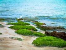 Водоросли на море стоковое изображение rf