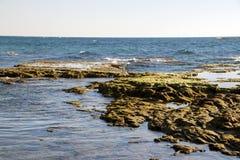 Водоросли прилива моря стоковая фотография rf