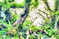 Водоросль или засоритель аквариумного растени или акватических Стоковые Фотографии RF