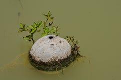 Водоросль кокоса Стоковое Фото
