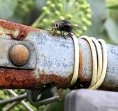 Волосатая муха Стоковое Изображение RF