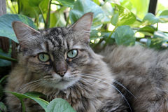 Волосатый кот в саде 01 Стоковые Изображения RF