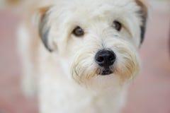 волосатый щенок Стоковое Фото