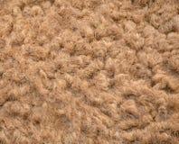 Волосы верблюда Стоковые Фото