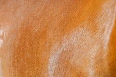 Волосы лошади Стоковая Фотография