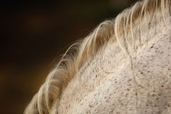 Волосы лошади Стоковая Фотография RF