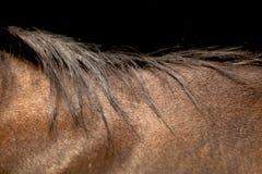 Волосы лошади Стоковые Изображения
