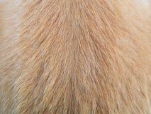 Волосы собаки макроса Стоковые Фото