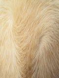 Волосы собаки макроса Стоковые Фотографии RF