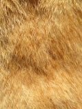 Волосы собаки макроса Стоковые Изображения