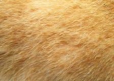 Волосы собаки макроса Стоковые Изображения RF