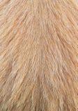 Волосы собаки макроса Стоковое Изображение RF