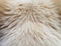 Волосы собаки макроса Стоковое фото RF