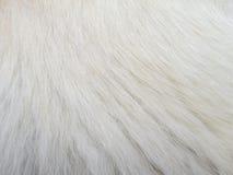Волосы собаки макроса Стоковая Фотография RF