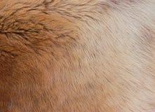 Волосы собаки Стоковое Изображение