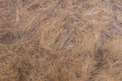 Волосы собак после перелинять Стоковое Фото
