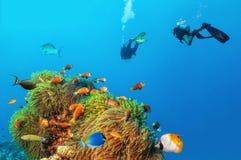 2 водолаза акваланга исследуя дно моря Стоковые Изображения RF