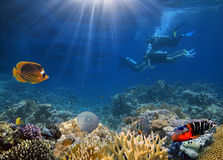 4 водолаза акваланга исследуя дно моря Стоковые Изображения