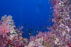 Водолазы акваланга на рифе и голубой предпосылке моря стоковые фото
