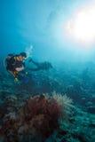 Водолазы акваланга приближают к дну моря Стоковое Изображение RF