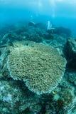Водолазы и Тихий океан коралловый риф Стоковое фото RF