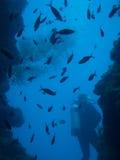 Водолазы на коралловом рифе в Бали стоковое фото rf