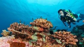 Водолаз акваланга молодой женщины показывая одобренный знак Стоковая Фотография