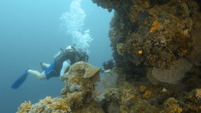 Водолаз акваланга на коралловых рифах сток-видео