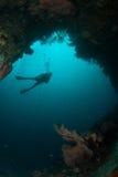 Водолаз, вентилятор моря в Ambon, Maluku, фото Индонезии подводном Стоковое Изображение RF