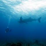 Водолаз китовой акулы и акваланга, Мальдивы Стоковое Изображение RF