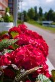 Во первых зацветать цветков летом стоковые изображения