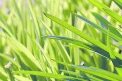 Во первых травы весны Стоковое Изображение RF