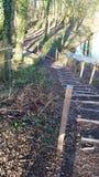 волшебная лестница Стоковое Изображение RF