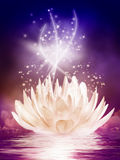 Волшебная лилия воды в ноче Стоковые Фото