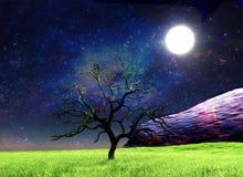 волшебная ноча стоковые изображения rf