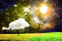 волшебная ноча Стоковое Фото